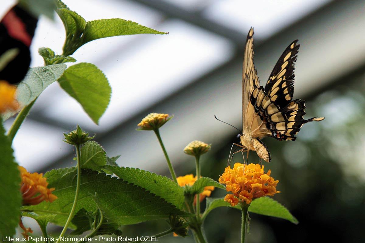 ile aux papillons vendée