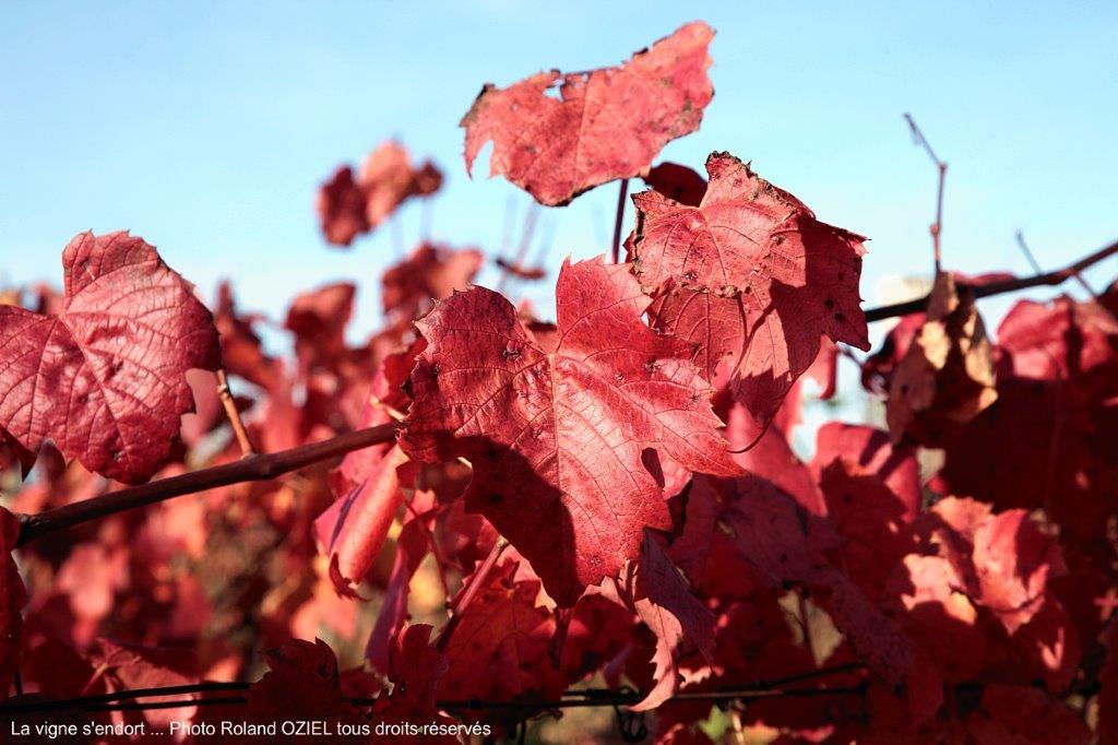 vignes de vendée